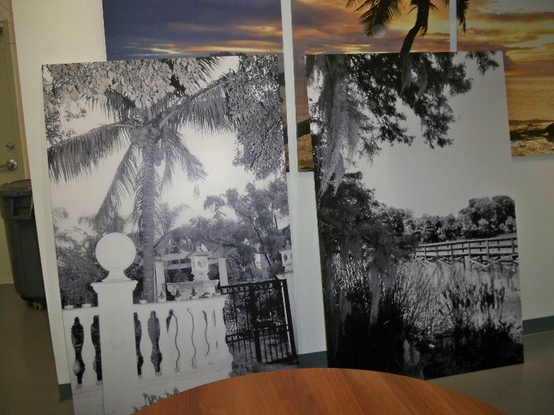 fardella-b-w-reprints-trees